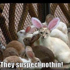 easter lols | Easter cat! Lol