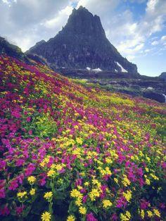 :/Wildflowers in Sum
