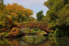 This is in New York and We shall go there!!  Gapstow Bridge, New York, USA