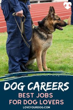In this article, we take a look at some of the most popular occupations that dog lovers might want to consider. Also, we look at how you can get into those careers and what you can expect from the role. #loveyourdog #dogjobs #dogcareers #bestjobsworkingwithdogs #workingwithdogs #dogtrainers #dogcare #policedogtraining Jobs Working With Dogs, Police Dog Training, Dog Information, R Dogs, Job S, Good Job, Dog Care, Fun Activities, Your Dog