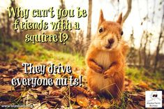 Oh, those nutty squirrels! Farm Humor, Hunting Humor, Friday Humor, Squirrels, The Expanse, Agriculture, Alaska, Animals, Life