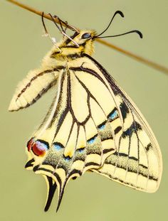Insect butterfly animal, 30 the most beautiful butterflies
