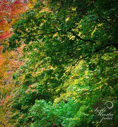 Autumn leaves, Naantali. Photo © Soili Mustapää.