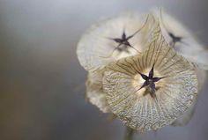 Multisimetria en flor