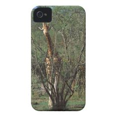 $$$ This is great for          	Massai Giraffe Case-Mate iPhone 4 Cases           	Massai Giraffe Case-Mate iPhone 4 Cases online after you search a lot for where to buyThis Deals          	Massai Giraffe Case-Mate iPhone 4 Cases lowest price Fast Shipping and save your money Now!!...Cleck Hot Deals >>> http://www.zazzle.com/massai_giraffe_case_mate_iphone_4_cases-179084461251960114?rf=238627982471231924&zbar=1&tc=terrest