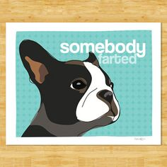 couldn't resist a 'someone farted' boston terrier pic - too funny