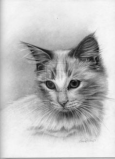 Najlepsze Obrazy Na Tablicy Koty Rysunek Ołówkiem 135 Cat Art