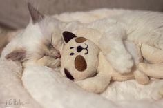 Kitten with her kitten doll go 'night-'night.