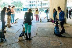 Seeing-eye puppies in training at BGU.