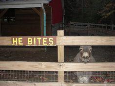 Sweet little donkey...