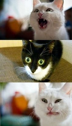 Silly cats