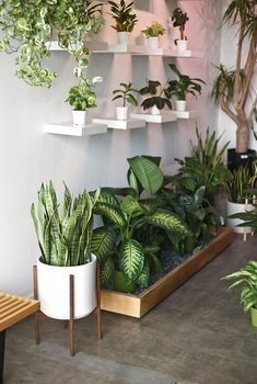 Plant Stand Discover Large Mid Century Modern Planter Plant Stand Plant Pot with Wood Stand- Ceramic Pot Room With Plants, House Plants Decor, Plant Decor, Bedroom Plants, Bedroom Decor, Decoration Plante, Best Indoor Plants, Outdoor Plants, Modern Planters