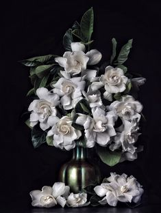 Our premium High Camp Supply gardenias bloom year-round and are cut-to-order and. Our premium High Pretty Flowers, White Flowers, Gift Boxes For Sale, Luxury Flowers, Gift Box Packaging, Luxury Candles, Camping Supplies, Flower Boxes, Green Plants