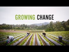 Growing Change - Jim Cochran helped invent the organic strawberry industry.  He was told that it couldn't be done and that no one cared about the health of farm workers and producing healthy food. He proved them wrong.