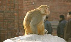 Surprised! or Confused! #Monkey
