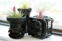 Planters made from old photography equipment