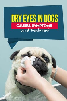 Guide on Dry Eyes in Dogs - Causes, Symptoms and Treatment Hair Growth Home Remedies, Home Remedies For Acne, Dry Eyes Causes, Cushing Disease, Dry Nose, Essential Oils Dogs, Dog Health Tips, Oils For Dogs, Best Supplements