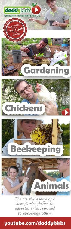 Gardening chickens beekeeping animals