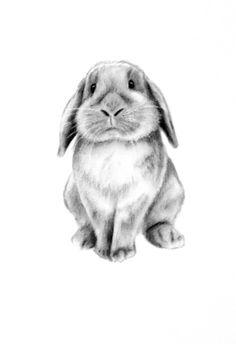 """Art de lapin, charbon de bois ORIGINAL 5 """"x 7"""" Lop oreilles Rabbit dessin - Art de croquis-Easter Bunny - pépinière Art - Art de Bunny - croquis de lapin"""