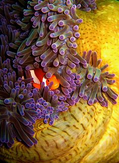 35 best nature images on pinterest marine life ocean life and