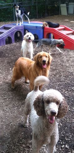 Ok, we are lined up! Now what?!? #WaitForIt #Patience #WeAreReady #TreatTime #DoggieDaycare