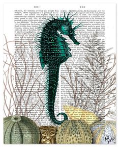 SeaHorse and Sea Urchins Book Print