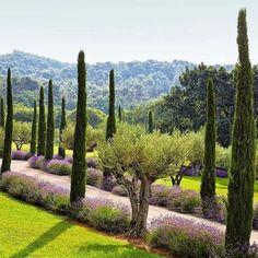Buy Italian Cypress Trees for Sale | Garden Goods Direct Backyard Garden Landscape, Garden Trees, Garden Landscaping, Garden Villa, Bonsai Garden, Architectural Digest, Landscape Architecture, Landscape Design, Italian Cypress Trees