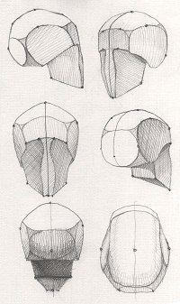 Рисование головы человека