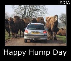 Happy Wednesday! #HappyHumpDay #drivinginstructor #drivingschool #DIA