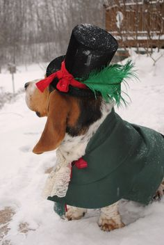 ridiculous christmas outfit, but I bet it made adorable photos #basset