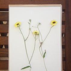 Daily inspiration - yellow flowers for our Herb Press