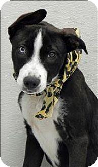 Adopt A Pet Kansas City Ks