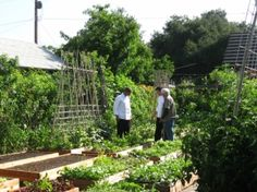 living off the land...  in the city...  66' x 132' urban lot = self-sufficient homestead with an organic garden that now supplies this family with 6,000 pounds of organic produce annually.