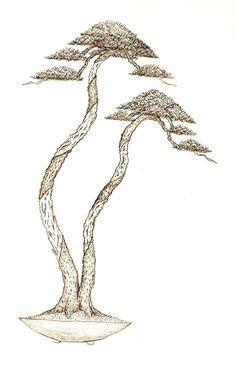 Alisios bonsái: Pensando en la exposición (propuesta I).