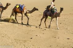 Camel Safari, Thar Desert, just outside of Jaisalmer, India