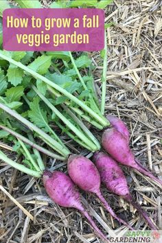 Grow a fall vegetable garden with the know-how and varieties discussed here. #vegetablegardening #gardening