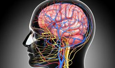How your brain can heal your body: Astonishing new research