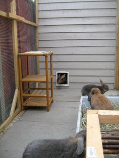 The rabbits can access the run from the shed via a catflap