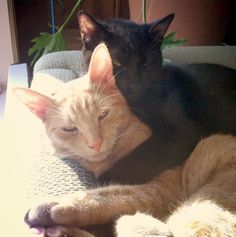 My cats MacDuff and Malcolm. Margaret, Coeur d'Alene, ID - 5/22/2015