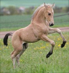 Mon poney il gambade comme ca d'une maniere un peu folle et desinvolte