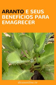 Aranto emagrece? Lemon Detox, Health Dinner, Free To Use Images, Food For A Crowd, Cactus House Plants, Medicinal Plants, Nutrition, Healthy Breakfast Recipes, Aloe Vera