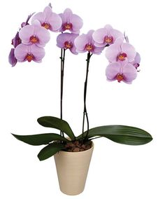 growing and caring for orchids