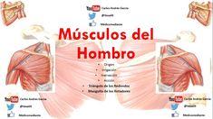 Anatomía - Músculos del Hombro (Origen, Inserción, Acción, Inervación, I...