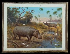 Schoolplatenschilder Koekkoek was natuurminnende illustrator School Posters, Vintage School, Hippopotamus, Where The Heart Is, Nature Pictures, Elephant, Tropical, Creatures, Sketches