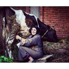حلب البقره ،وهو تدليك الثدي البقره وافضل طريقه الحصول علي اللبن منها