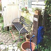 Entrance,花,植物,ガーデニング,DIY,手作りの庭に関連する他の写真