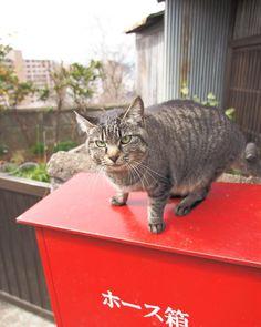 #cat #neko #nekoclub #hiroshima #japan  #instagood  #japantravel #happy #fun #look #photography #portrait #instajapan #instadaily #ポートレート #japantrip #amazing #photo_shorttrip #solo #yolo  #awesome #cool  #wonderful_places