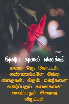 Morning Thoughts, Good Morning Messages, Good Morning Quotes, Good Life Quotes, Life Is Good, Golden Quotes, Tamil Love Quotes, Genius Quotes, Morning Pictures