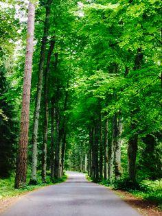 Aulanko Hämeenlinna Shade Trees, Lake District, Helsinki, Green Colors, Finland, Natural Beauty, Country Roads, Park, World