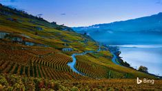 The 'crush season,' aka the grape harvest, has arrived in these picturesque Swiss vineyards. The steeply terraced vineyards of the Lava...